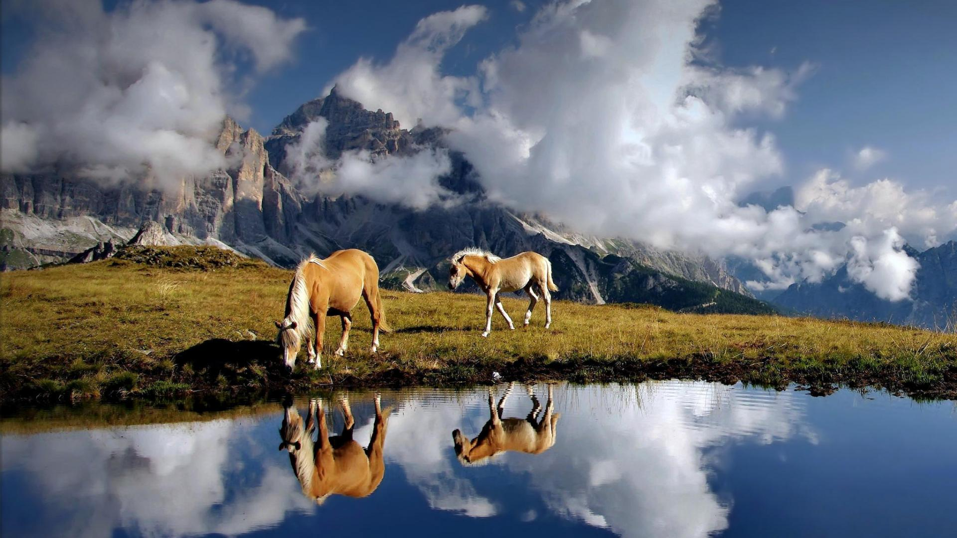 Horses Tag wallpapers Fog Animals Horses Hd Background Animal