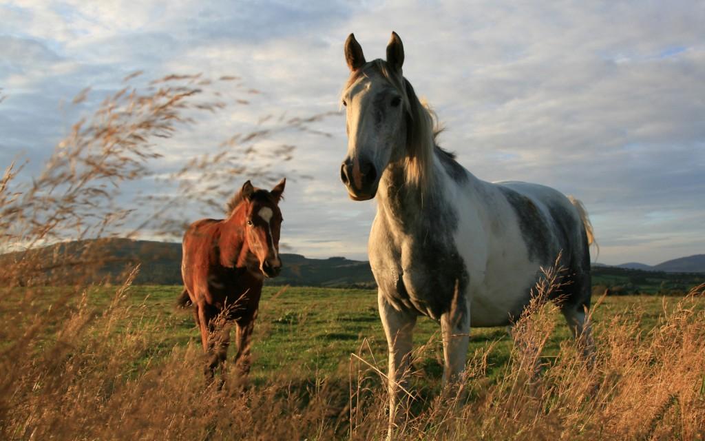 beautiful horses field wallpapers