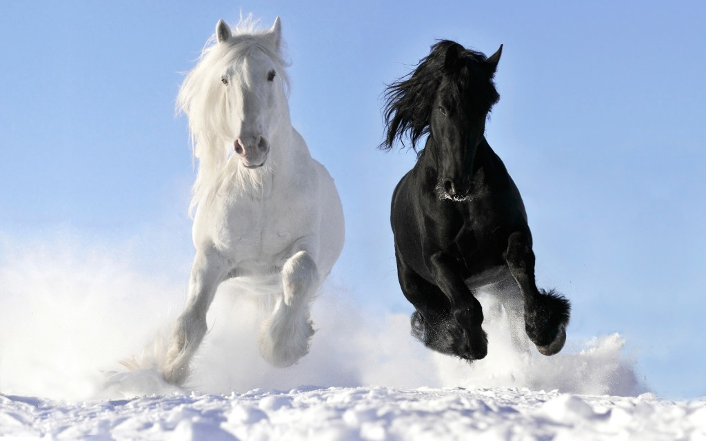 free horse wallpapers