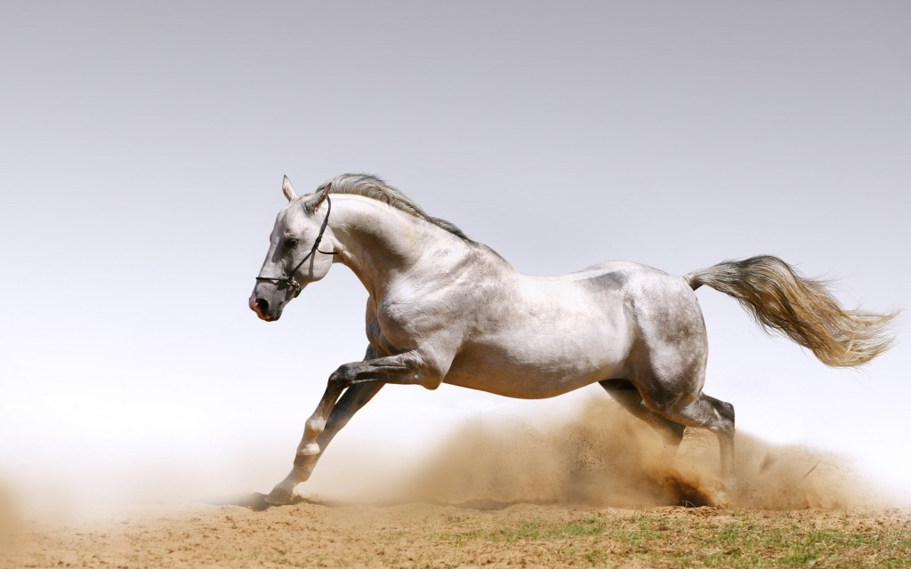 hd free horse wallpapers
