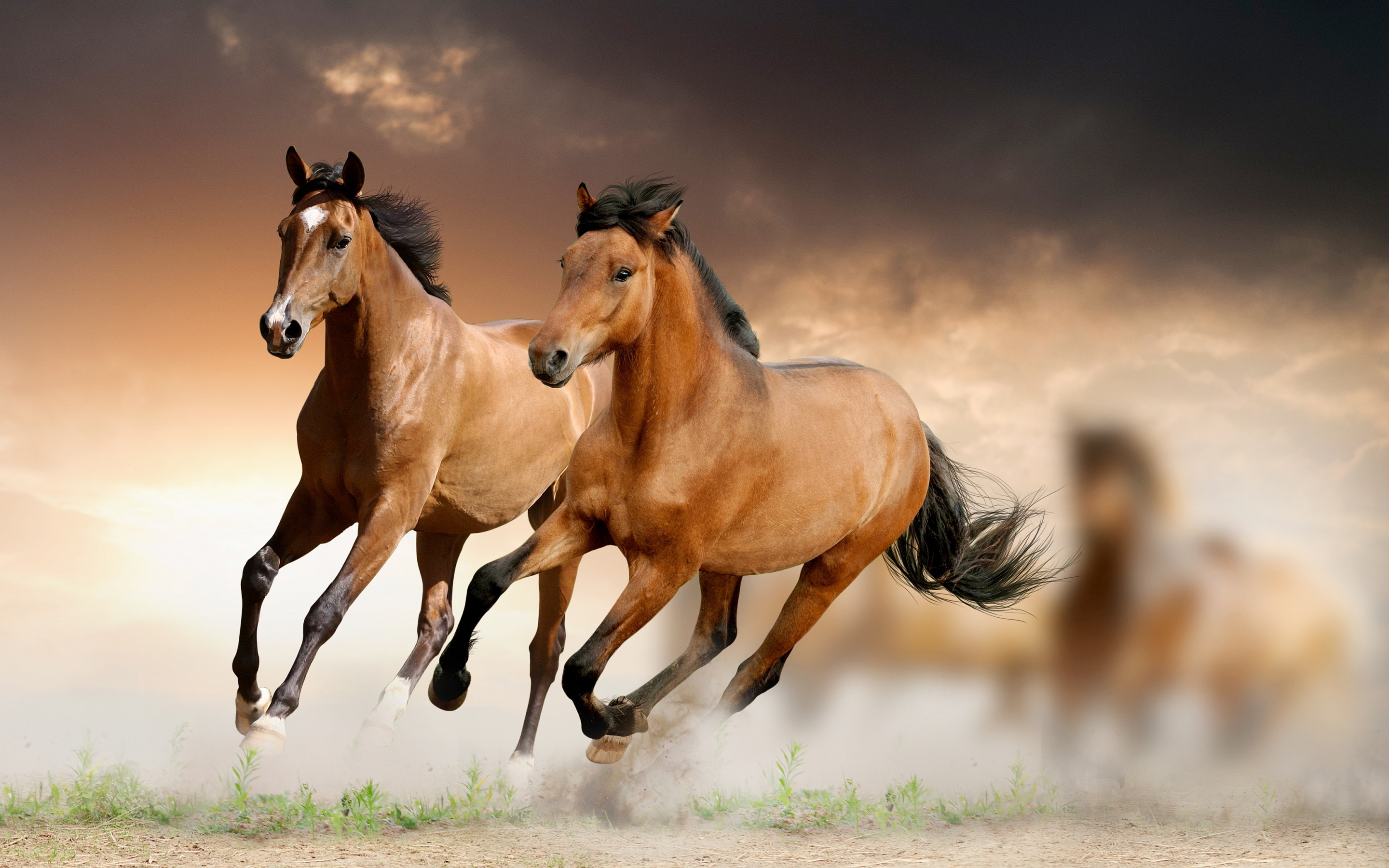 Hd horses wallpaper free download hd horses wallpaper voltagebd Choice Image
