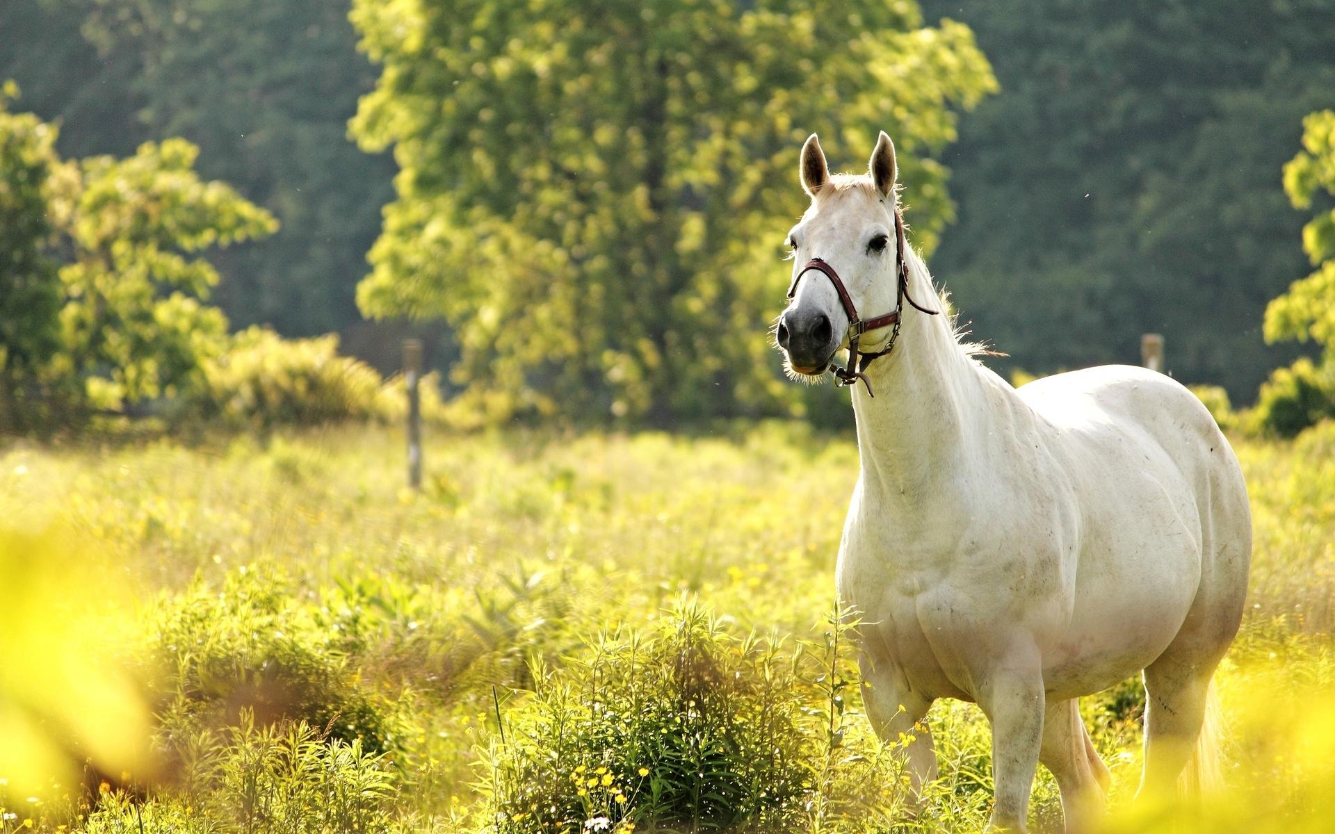 <b>Horse HD</b> Desktop Wallpapers - Dat Nature