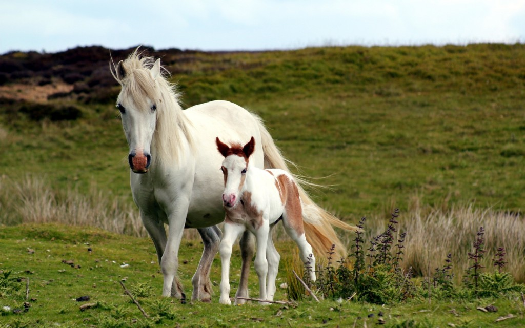 white horses field wallpapers
