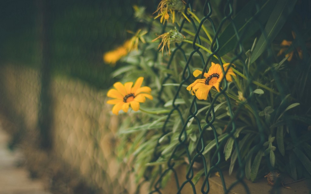 flowers-fence-wallpaper-44857-45997-hd-wallpapers