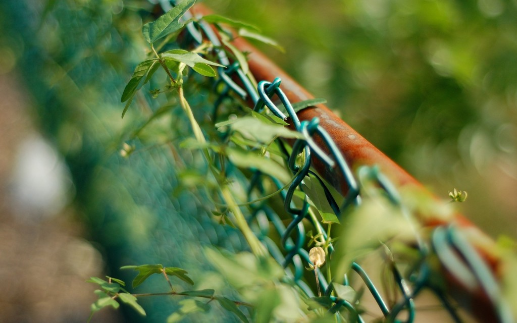 vegetation-on-fence-wallpaper-44803-45942-hd-wallpapers