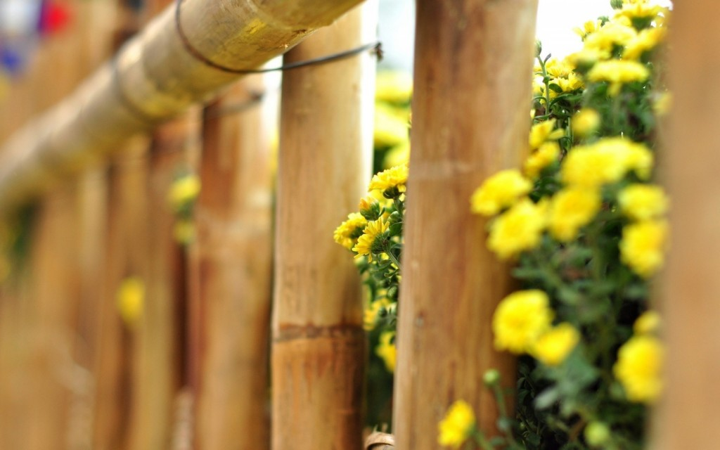 wonderful-flowers-fence-wallpaper-44859-45999-hd-wallpapers