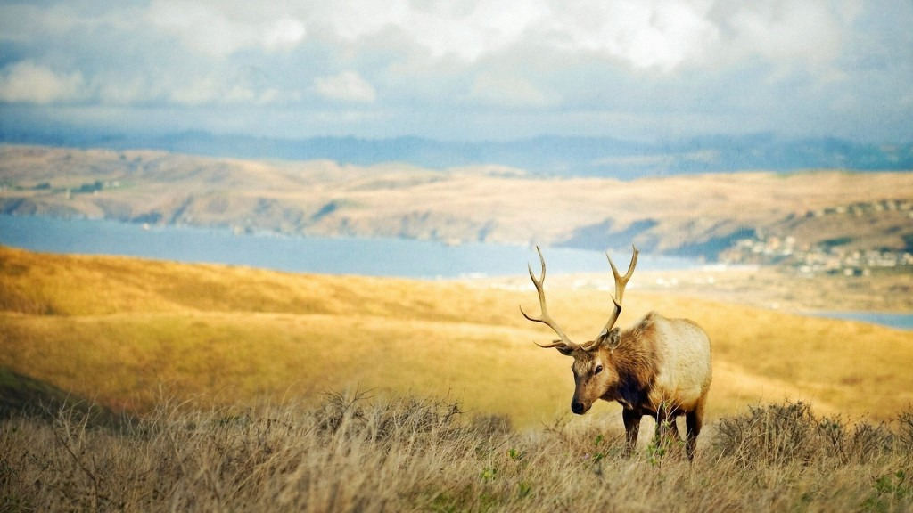 animals-elk-wallpaper-49282-50948-hd-wallpapers