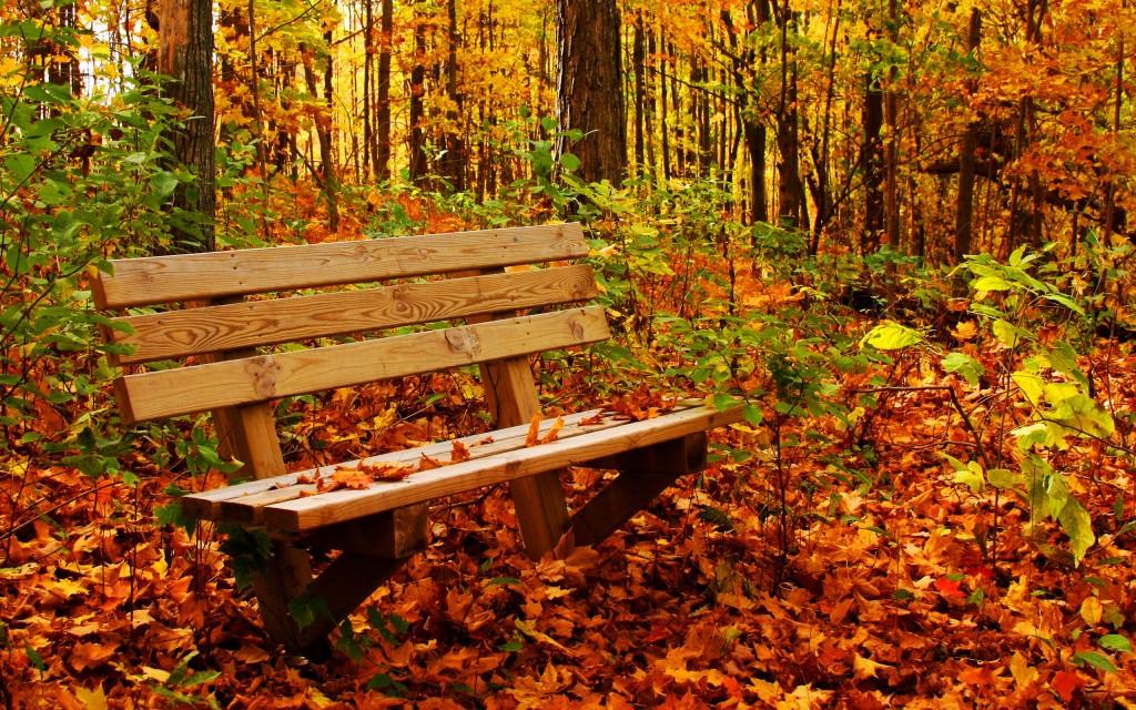 autumn-bench-wallpaper-44426-45551-hd-wallpapers