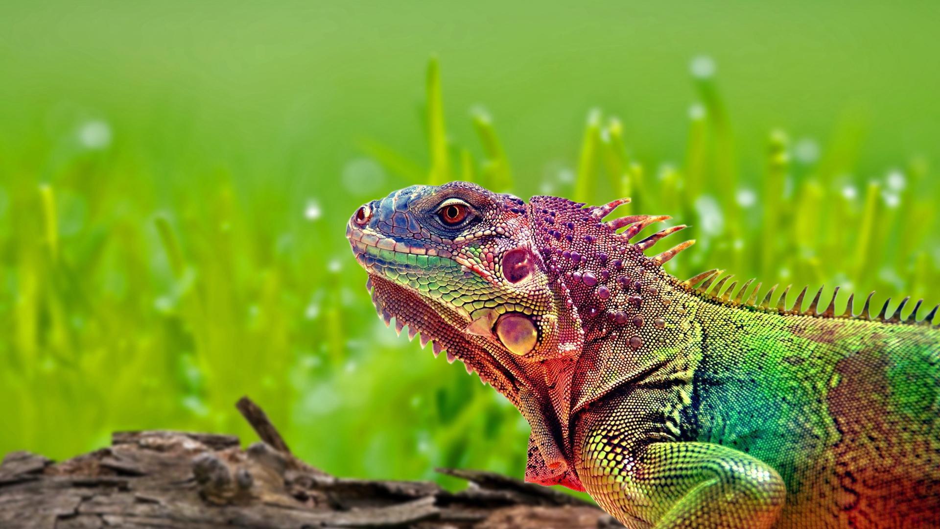 chameleon wallpaper 9661 - photo #15
