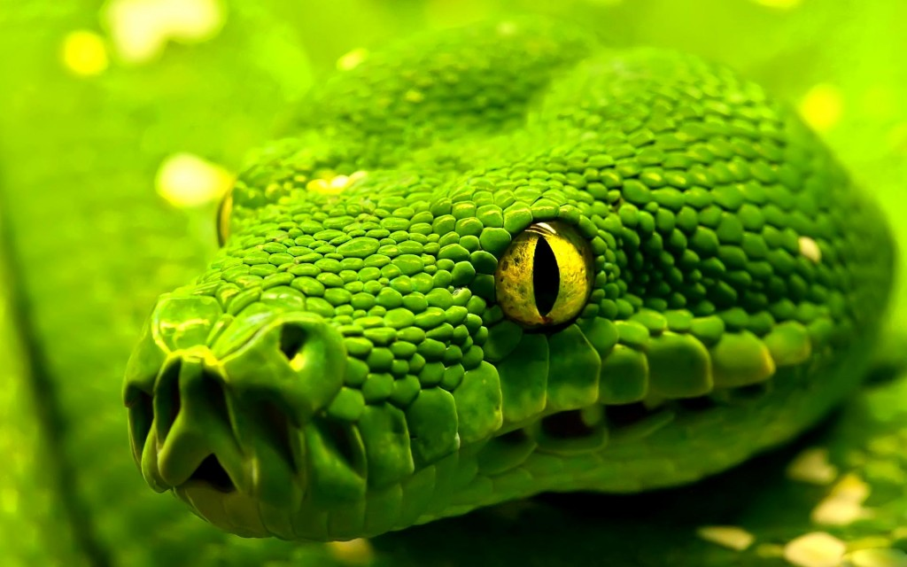 beautiful-snake-wallpaper-29854-30573-hd-wallpapers