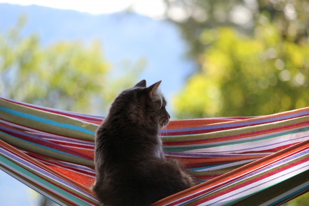 cat-in-hammock-wallpaper-49212-50874-hd-wallpapers