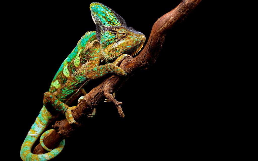colorful-chameleon-34523-35300-hd-wallpapers