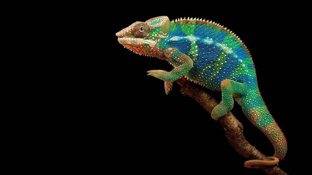 colorful-chameleon-wallpaper-34527-35304-hd-wallpapers