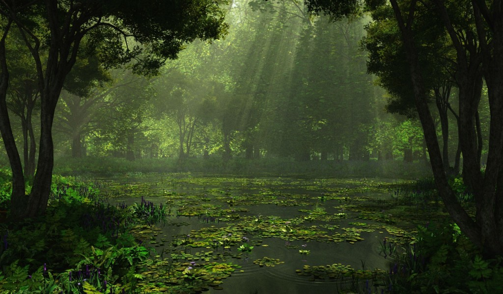 cool-swamp-wallpaper-33788-34549-hd-wallpapers