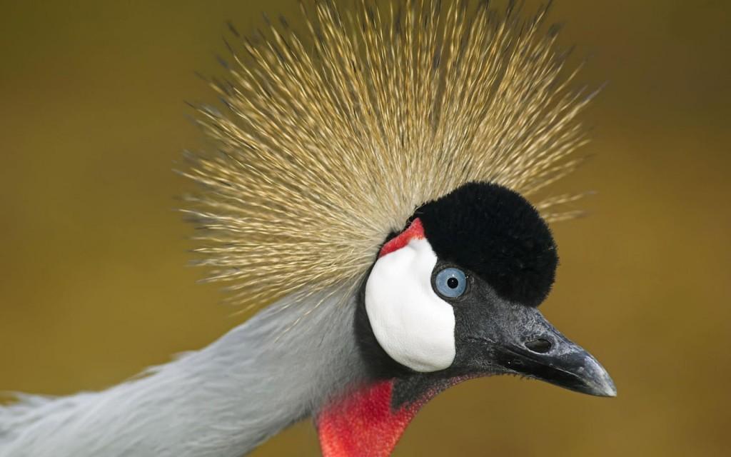crane-bird-38432-39309-hd-wallpapers