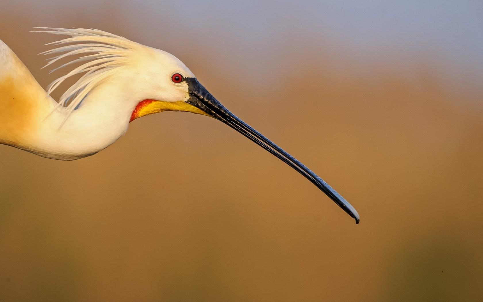 Crane bird wallpapers archives - Animal and bird hd wallpaper ...