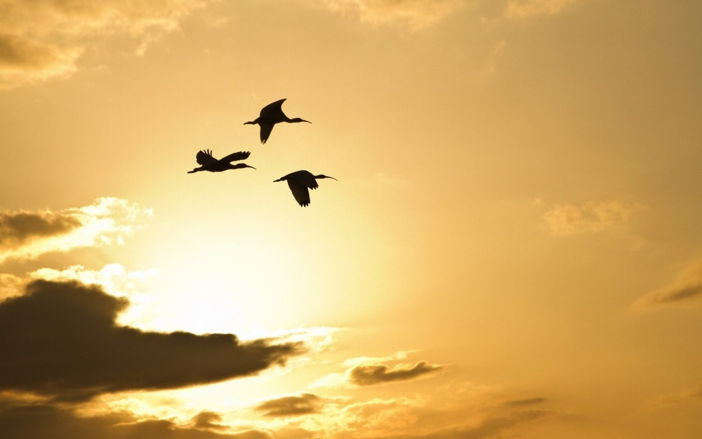 crane-bird-pictures-38436-39314-hd-wallpapers