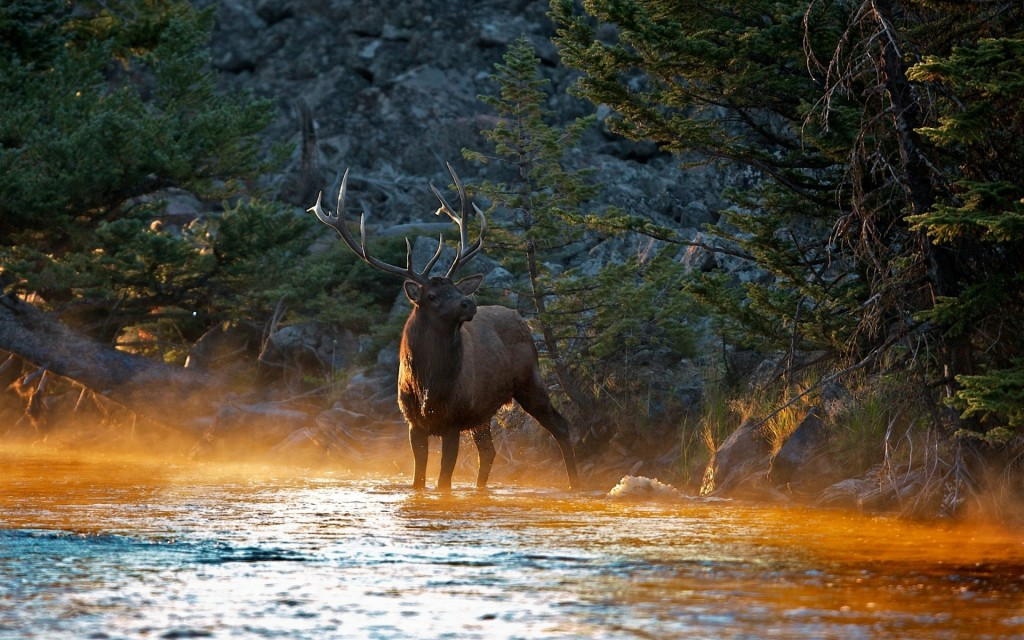 elk-wallpaper-39373-40281-hd-wallpapers