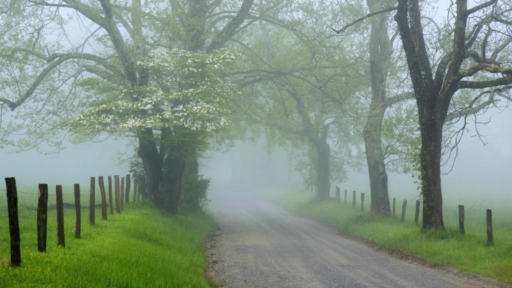 fog-wallpaper-36628-37463-hd-wallpapers