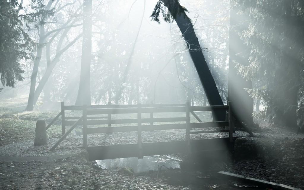 free-fog-wallpaper-36625-37460-hd-wallpapers
