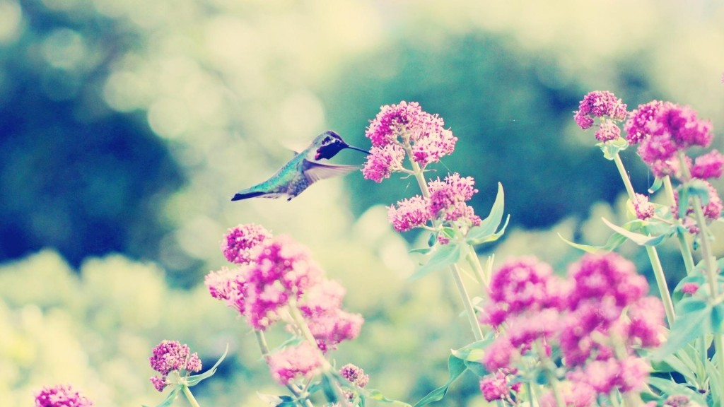 free-hummingbird-wallpaper-19953-20458-hd-wallpapers
