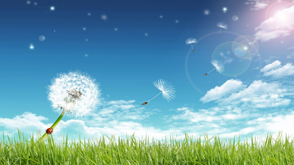 free-summer-wallpaper-5259-5381-hd-wallpapers