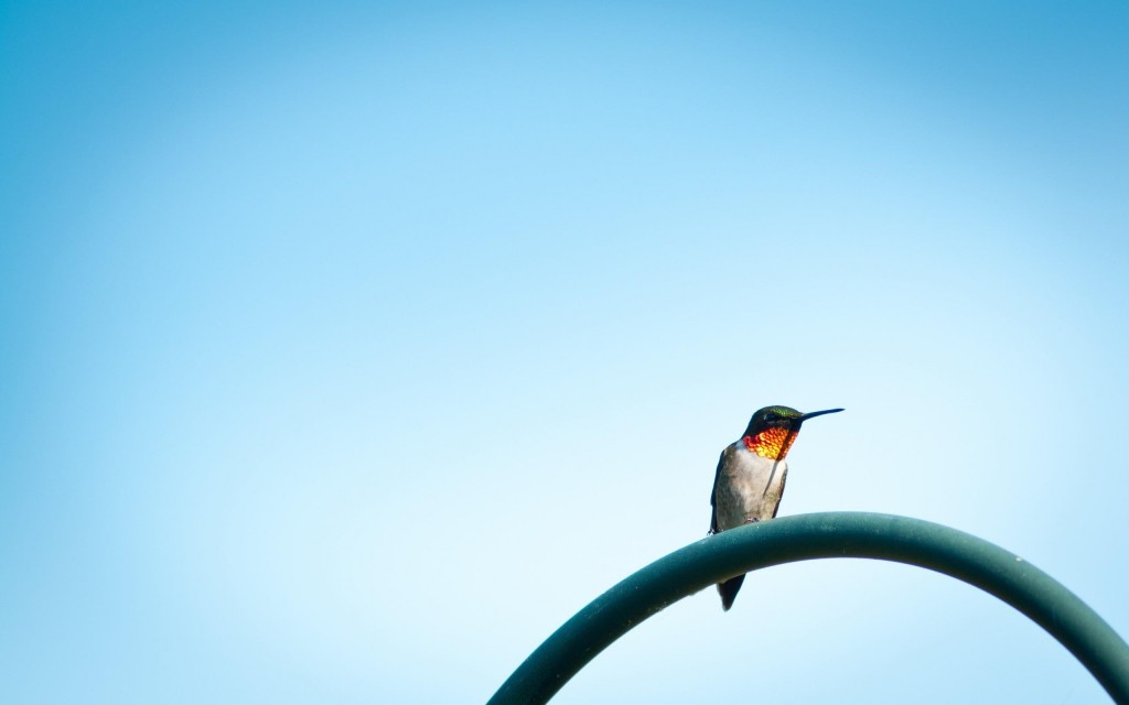 hummingbird-wallpaper-19951-20456-hd-wallpapers