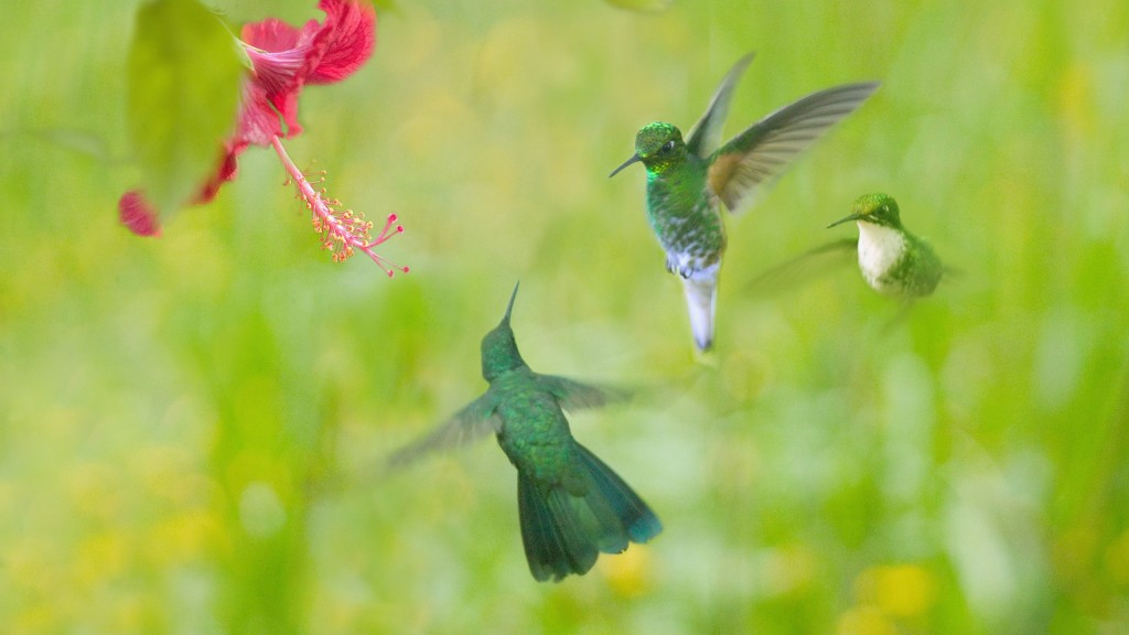 hummingbird-wallpaper-46016-47299-hd-wallpapers