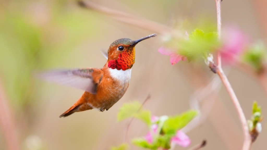 hummingbird-wide-wallpaper-hd-49263-50927-hd-wallpapers
