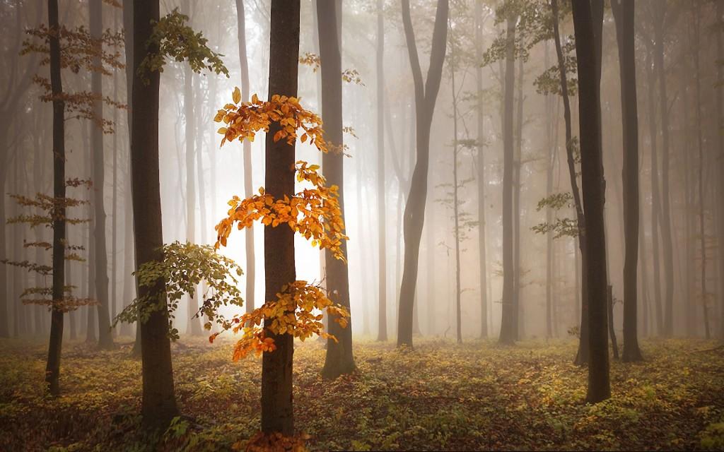 lovely-fog-wallpaper-36644-37479-hd-wallpapers