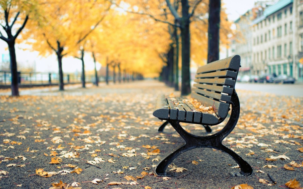 montreal-park-bench-wallpaper-44607-45737-hd-wallpapers