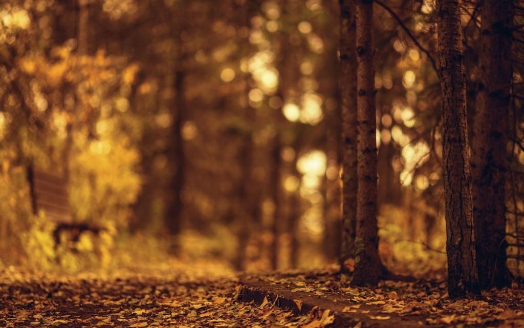 nature-bench-blur-wallpaper-44620-45750-hd-wallpapers