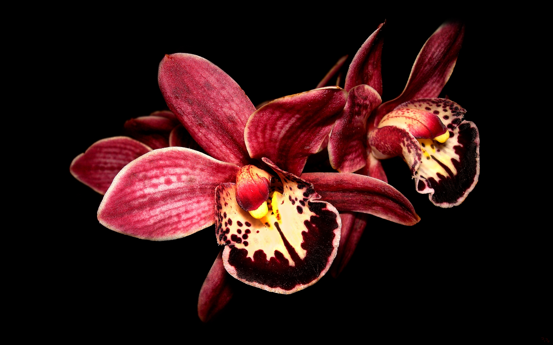 orchid wallpapers backgrounds images -#main