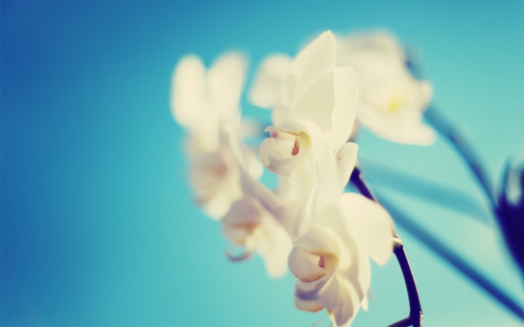 orchid-wallpaper-24550-25220-hd-wallpapers