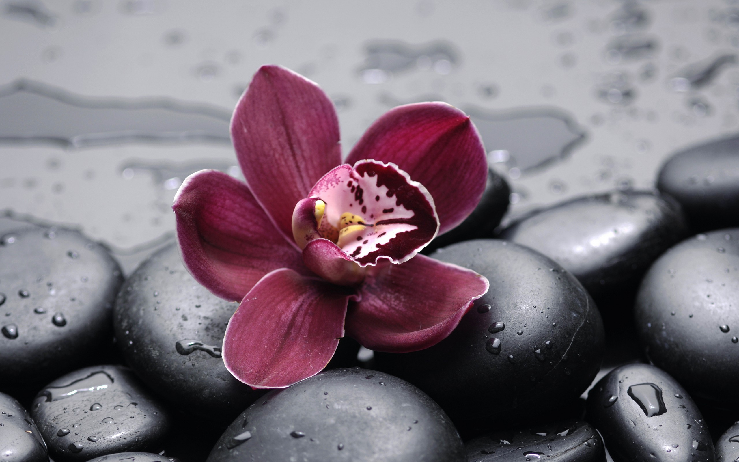 orchid wallpapers backgrounds images - photo #23