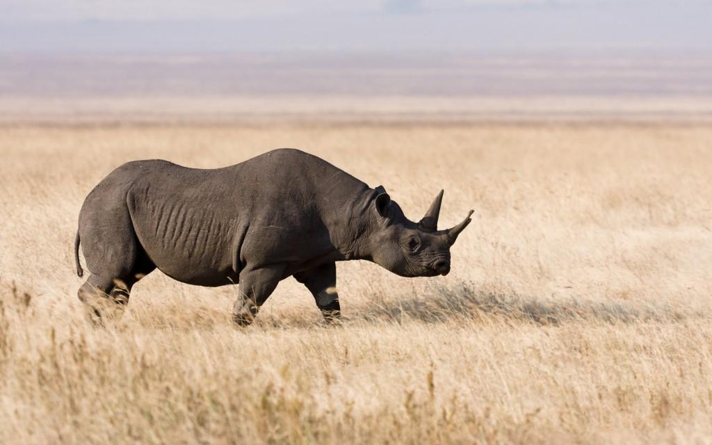 rhinoceros-wallpaper-43098-44126-hd-wallpapers
