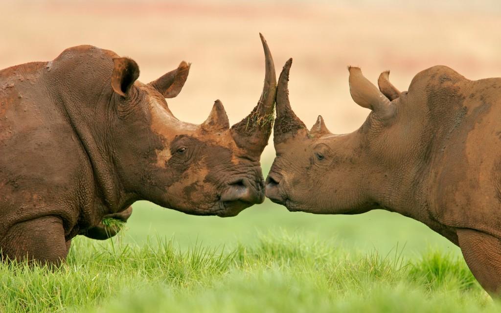rhinoceros-wallpaper-background-49317-50983-hd-wallpapers