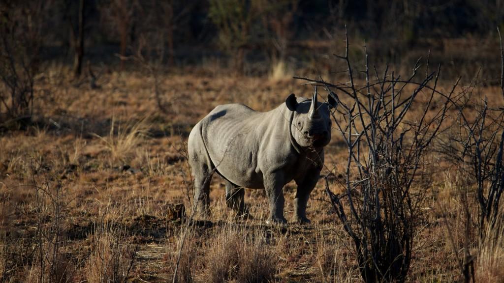 rhinoceros-wallpaper-hd-43099-44127-hd-wallpapers