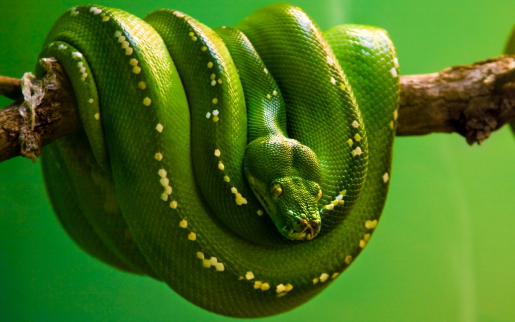 snake-wallpaper-29848-30567-hd-wallpapers