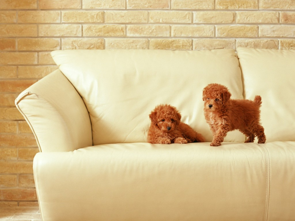 sofa-wallpaper-42607-43617-hd-wallpapers