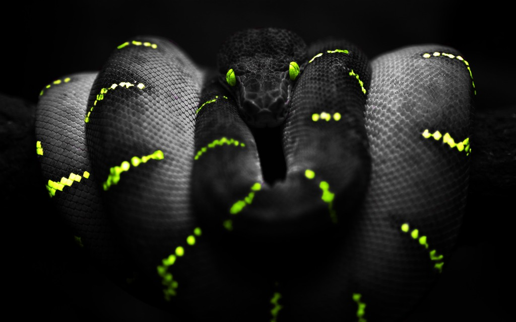 stunning-snake-wallpaper-29849-30568-hd-wallpapers