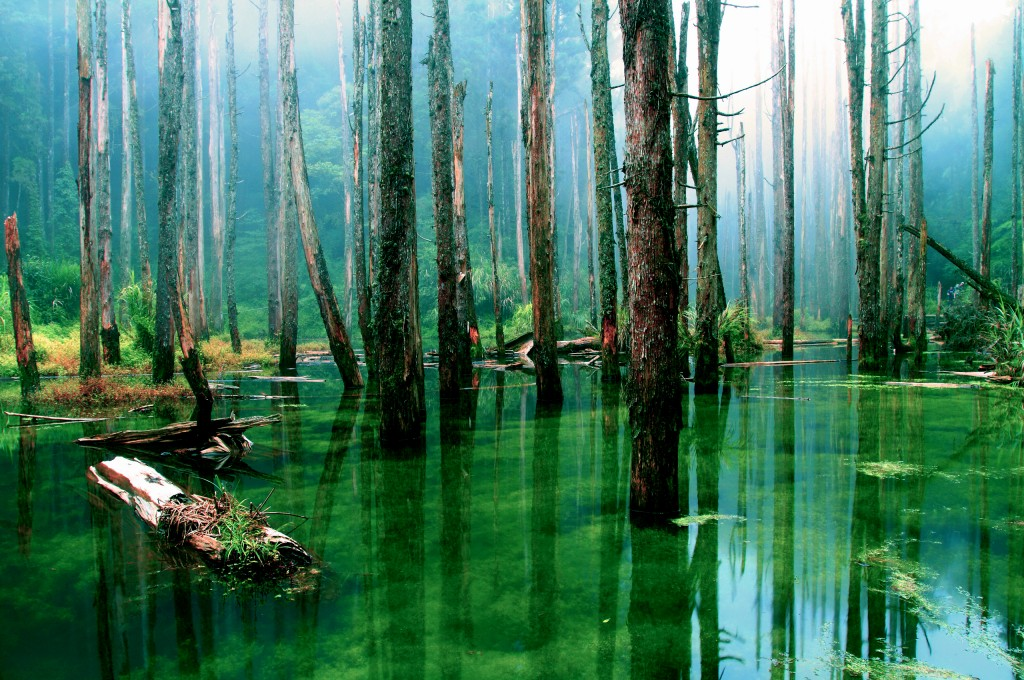 swamp-33786-34547-hd-wallpapers