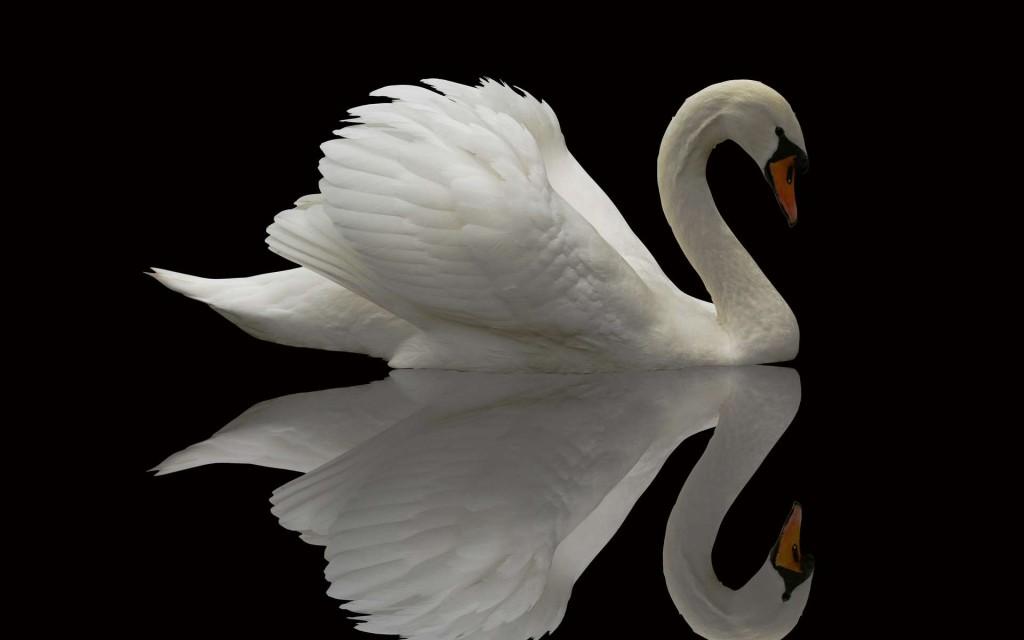 swan-28064-28786-hd-wallpapers