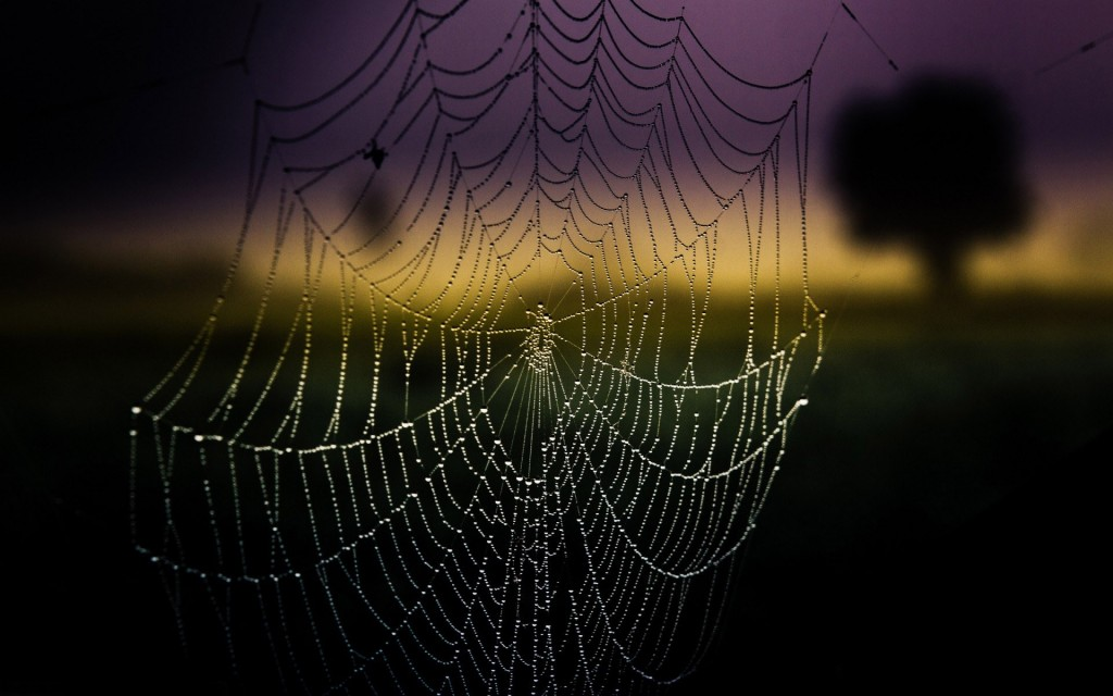 amazing-spider-web-wallpaper-41576-42552-hd-wallpapers