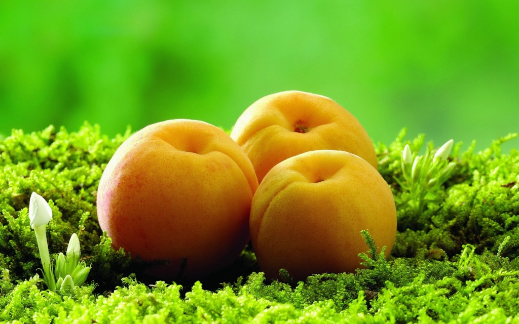 apricot-wallpaper-32258-32997-hd-wallpapers