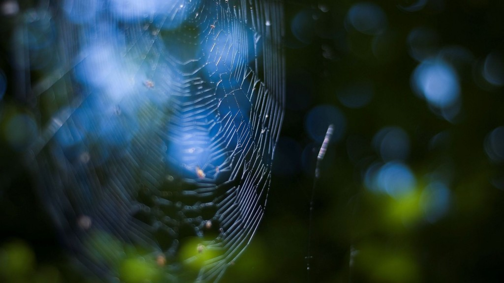 spider web wallpapers