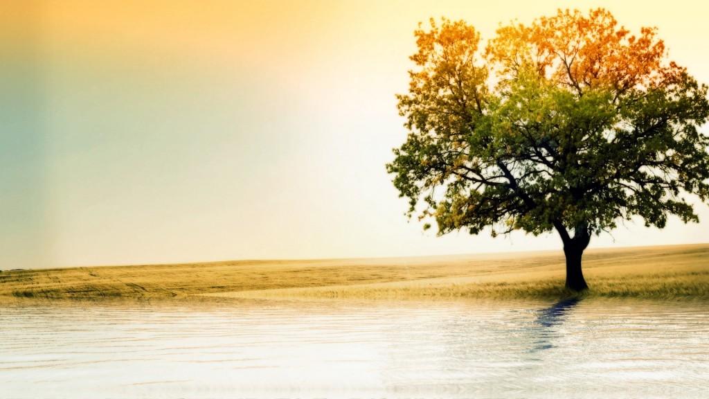 beautiful-oak-tree-wallpaper-32968-33723-hd-wallpapers
