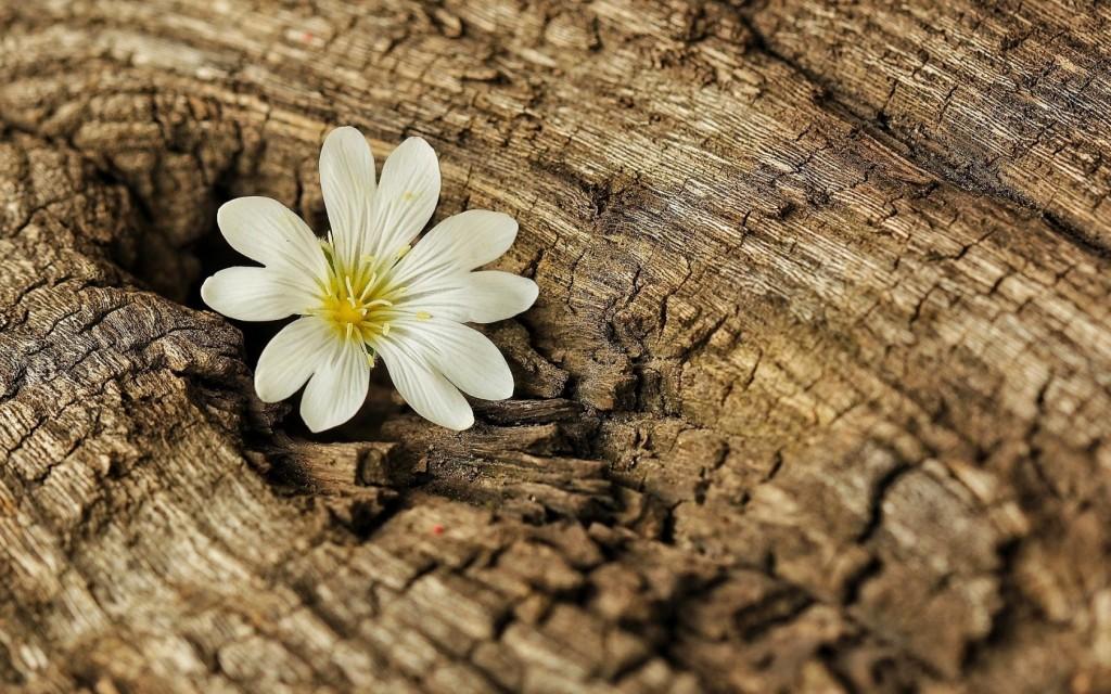 beautiful-tree-bark-wallpaper-26066-26751-hd-wallpapers