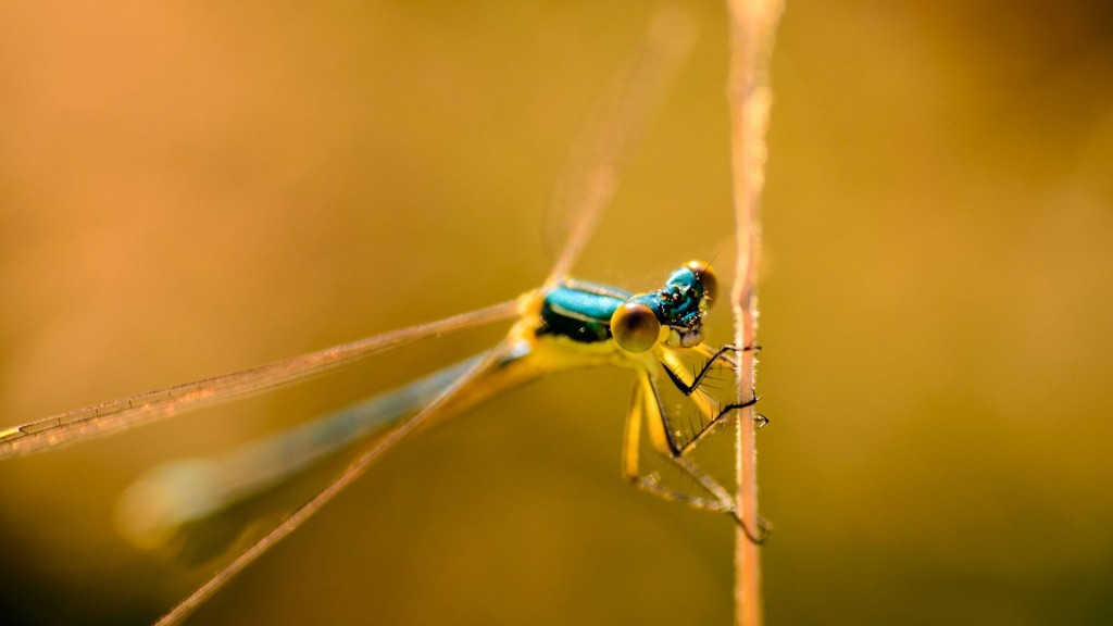 cool-dragonfly-wallpaper-39234-40139-hd-wallpapers
