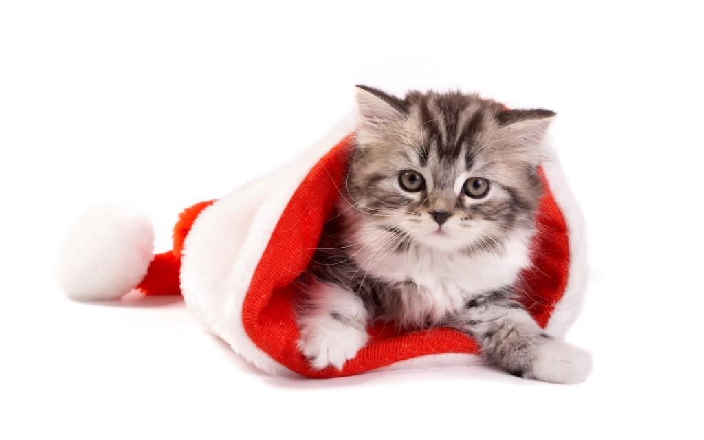 cute-santa-hat-wallpaper-41716-42695-hd-wallpapers